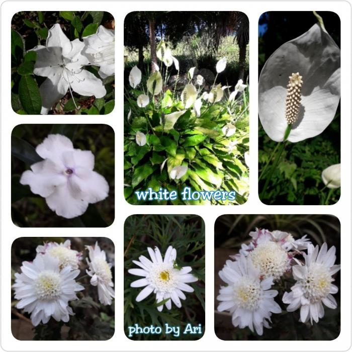 Aneka bunga putih nan indah. Photo by Ari
