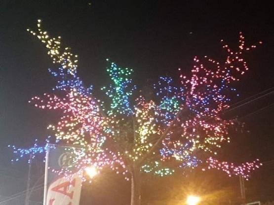 Pohon berbunga warna warni lampu di depan RITA supermarket. Photo by Ari