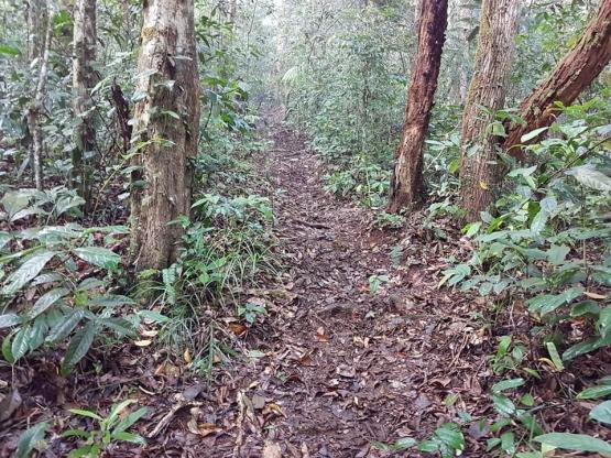 Contoh trek pintu rimba menuju pos Gelanggang Hantu (dokpri)