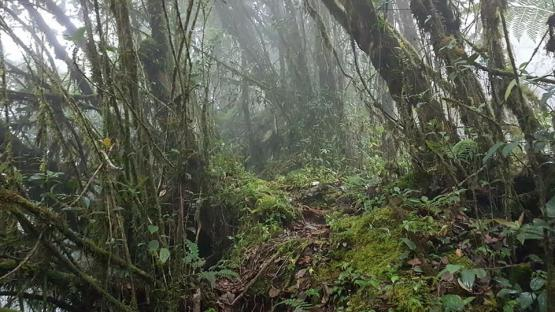 Contoh trek menuju top puncak, kiri-kanan jurang dalam (dokpri)