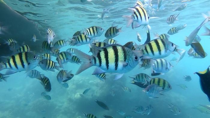 Ikan-ikan di spot snorkeling Pulau Macam Gundul (dokpri)