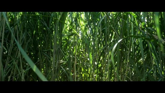 Rumput begitu tinggi (sumber: IMDb)