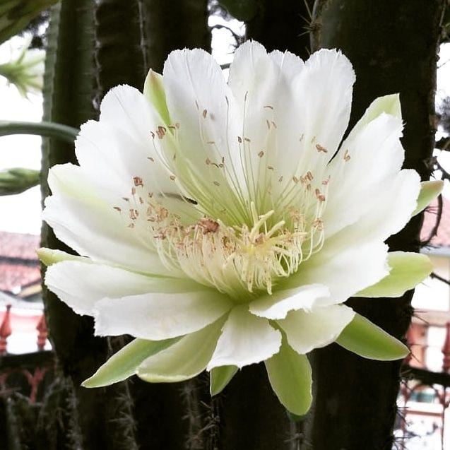 Bunga Kaktus. Dokumen pribadi