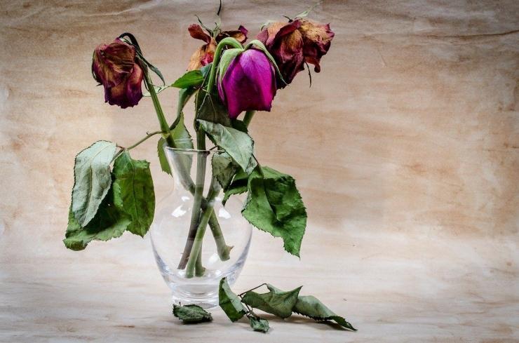 sumber ilustrasi: pixabay.com/publicdomainpictures