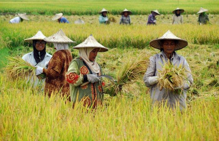 Pengembangan Rantai Nilai Pertanian [ilustrasi, goodnewsfromindonesia.id]