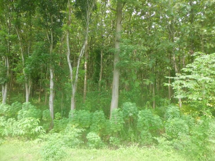 illustrasi hutan ( dokpri)