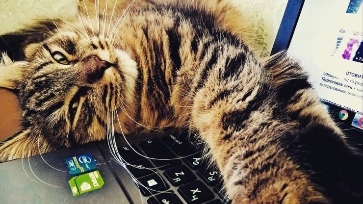 Para kucing susah membiarkan majikannya tenang bekerja di rumah (ilustrasi: pixabay)
