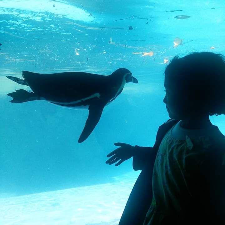 Hanna suka penguin. Dokpri.