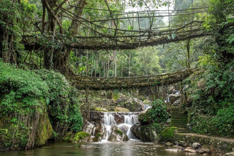 Jembatan hidup terbuat dari akar pohon di Meghalaya. Disebutkan ada yang berusia hingga 500 tahun (sumber: www.fodors.com)