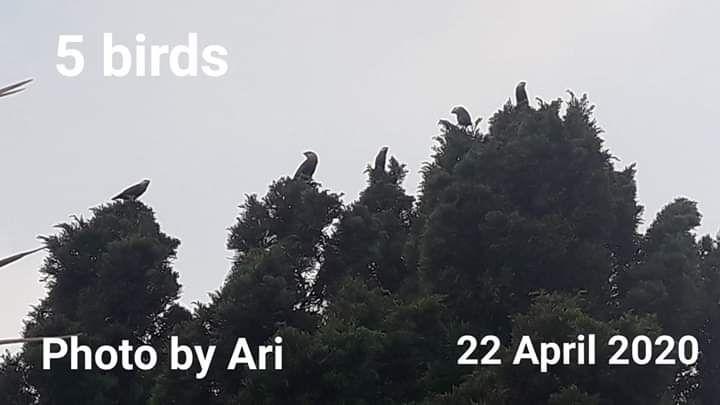 Pemandangan kala senja di halaman depan rumah. Photo by Ari