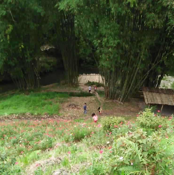 Tanaman bambu di sekitar bendungan Badigulen, Lembah Seribu Bunga, Barusjahe, 2018 (Dokpri)