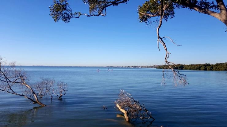 Hutan mangrove Wynnum Sumber: dokumen pribadi