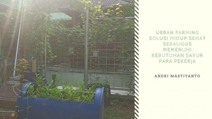 Deskripsi : Urban Farming Solusi Hidup Sehat Sekaligus Memenuhi Kebutuhan Sayur Para Pekerja I Sumber Foto : dokpri