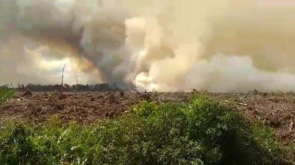 Kebakaran Hutan dan Lahan/Shutterstock.