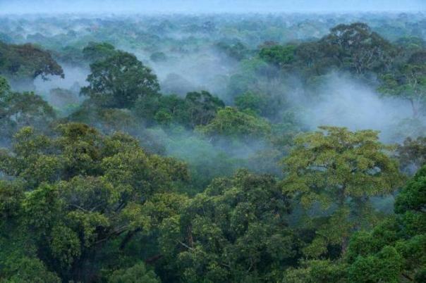 Hutan sebagai sumber hidup semua makhluk hidup (Foto dok : Tim Laman).
