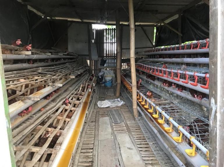 Ternak Ayam Petelur Pilihan di Masa Pandemi Halaman 1 ...