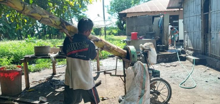 Om Alo (40) sedang memasukan batang pisang untuk digiling. Foto: Roman Rendusara