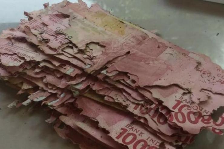 Ilustrasi uang dimakan rayap (Dok: Kompas.com)