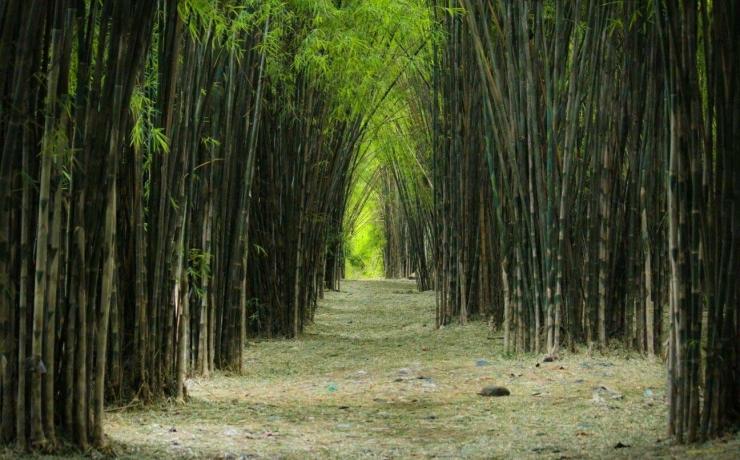 Kebun Bambu Keputih Sukolilo Surabaya | ebahana.com