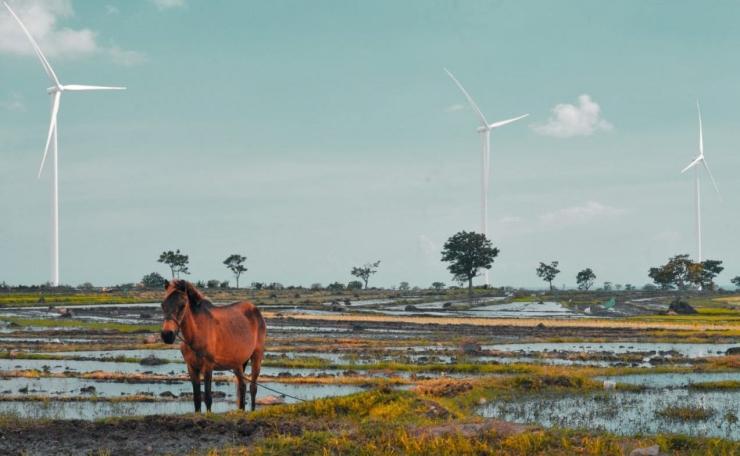 Jeneponto tanah kelahiran saya, negeri kincir dan kuda (Foto: Daeng Sibali)