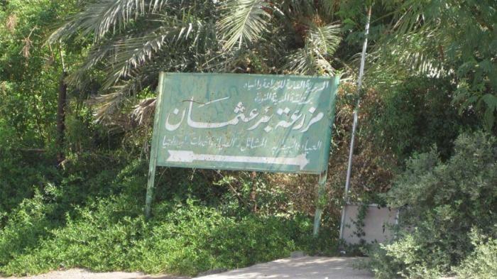 Kebun Kurma Utsman bin Affan | @kaekaha