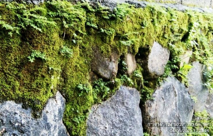 Ilustrasi gambar lumut tumbuh di susunan batu peyangga tanah agar tidak longsor.