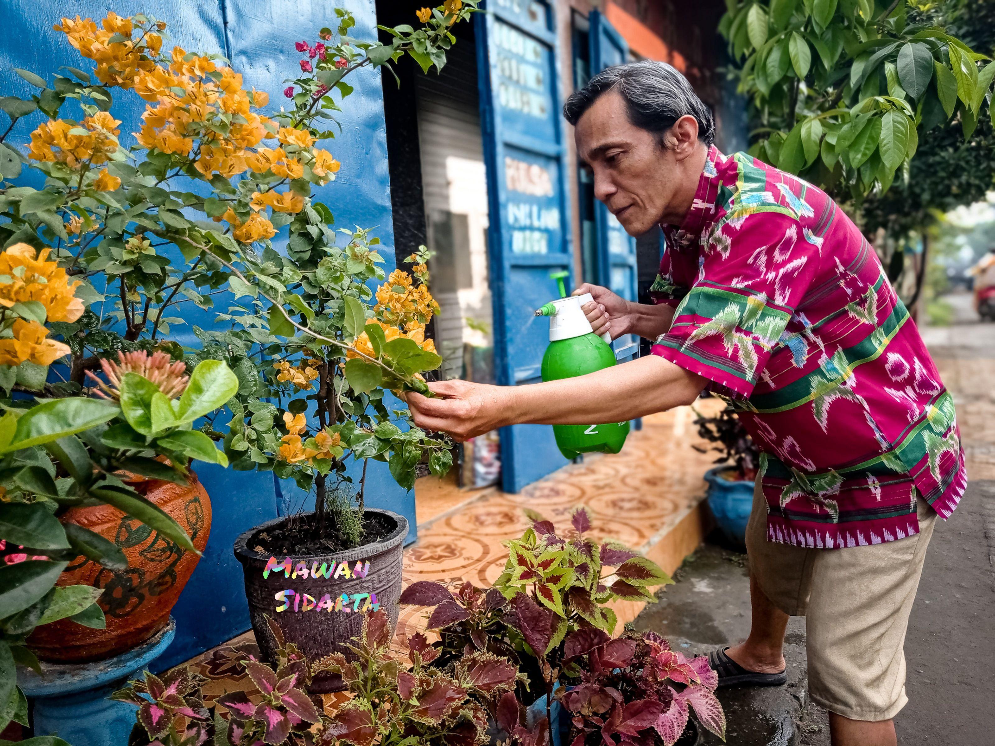 Merawat koleksi tanaman hias (Mawan Sidarta)