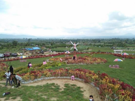 Taman 1.000 Bunga Desa Raya, Berastagi, Tanah Karo| Dokpri