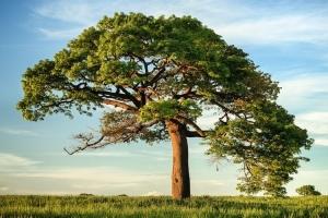 Ide Puisi: Pohon