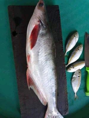 Air Cuci Ikan, Air Kehidupan bagi Tanaman