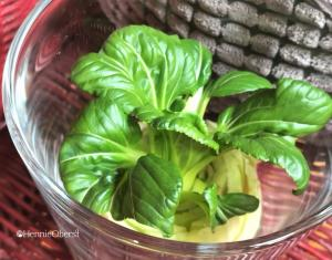 Regrowing, Menumbuhkan Tanaman Baru dari Sisa Sayuran