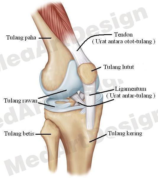 Osteoarthritis hip
