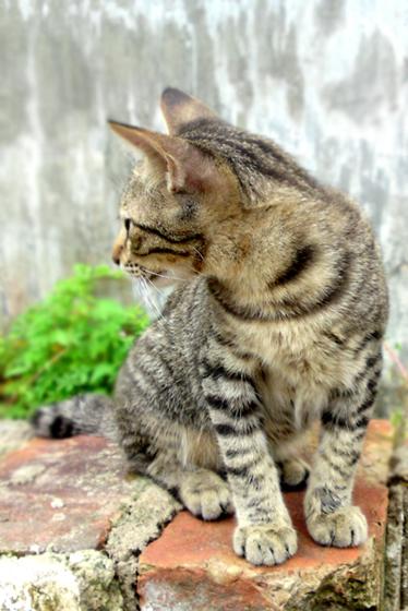 Gambar Kucing Bergerak godean.web.id