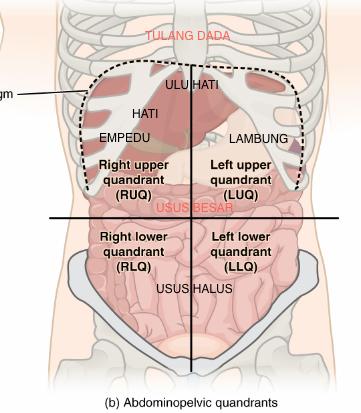 Apa Itu Gastroenteritis?