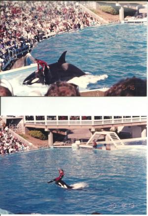 Orca: 'Killer Whale' yang Penyayang dan Tidak Pernah