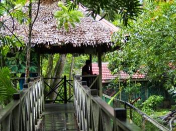 Wisata Beruang Madu Di Balikpapan Kalimantan Timur Halaman