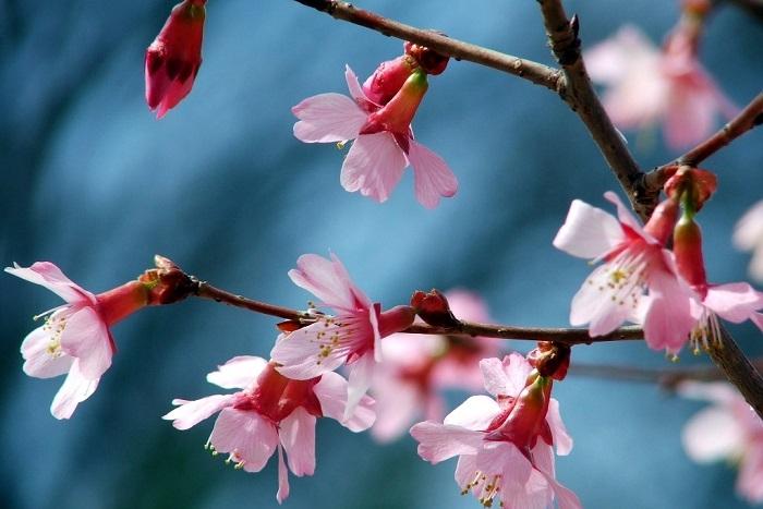 Mengenal Bunga Nasional Berbagai Negara Di Dunia Halaman All Kompasiana Com